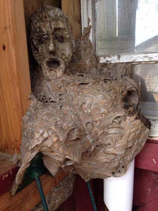 Гнездо на стършелли, построено около маска в навеса... И източник на много кошмари