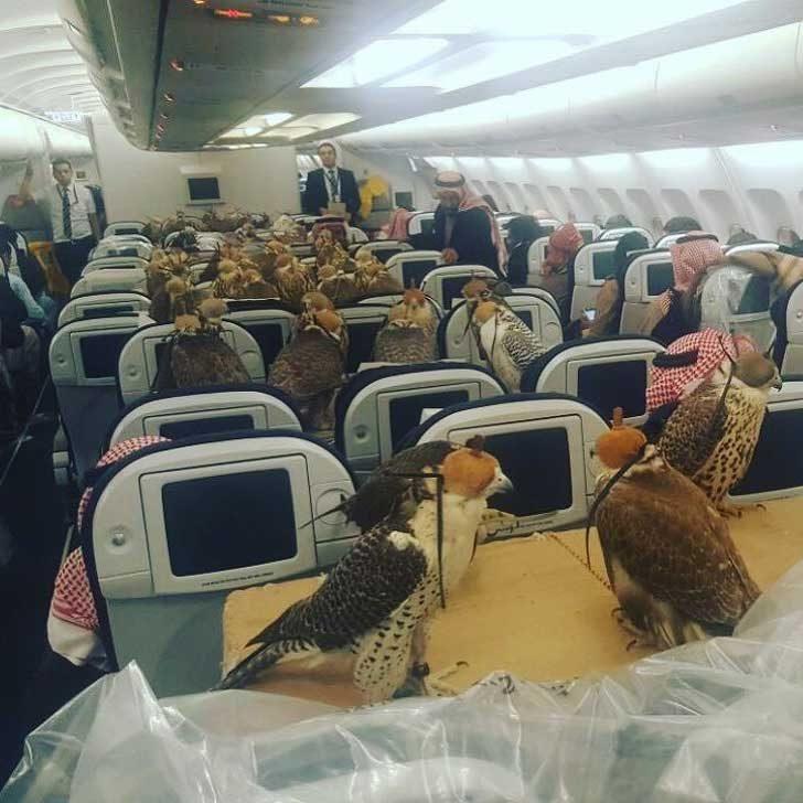 Снимка от самолета, за който саудитски принц купи билети на своите 80 сокола