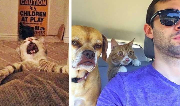 19 забавни снимки на кучета и котки, които ще те накарат да се усмихнеш