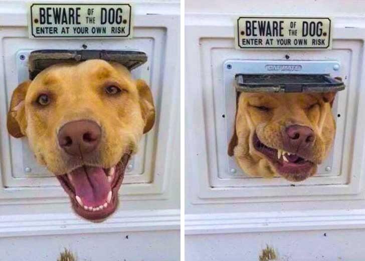 Внимание, зло куче!