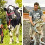 20+ гигантски животни, които трудно ще повярваш, че са истински
