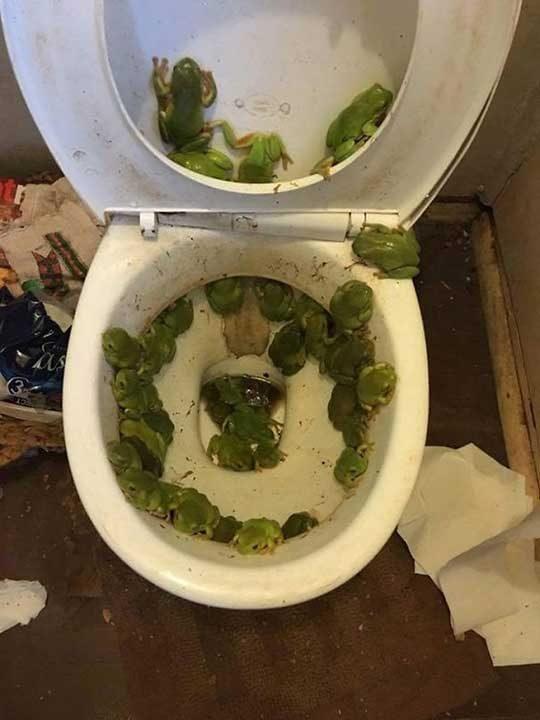 """""""Тоалетната вкъщи, след като в града имаше наводнение"""""""