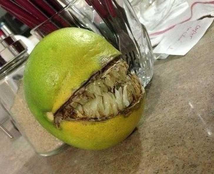 """""""Един приятел има портокалово дръвче, но този излезе малко различен..."""""""