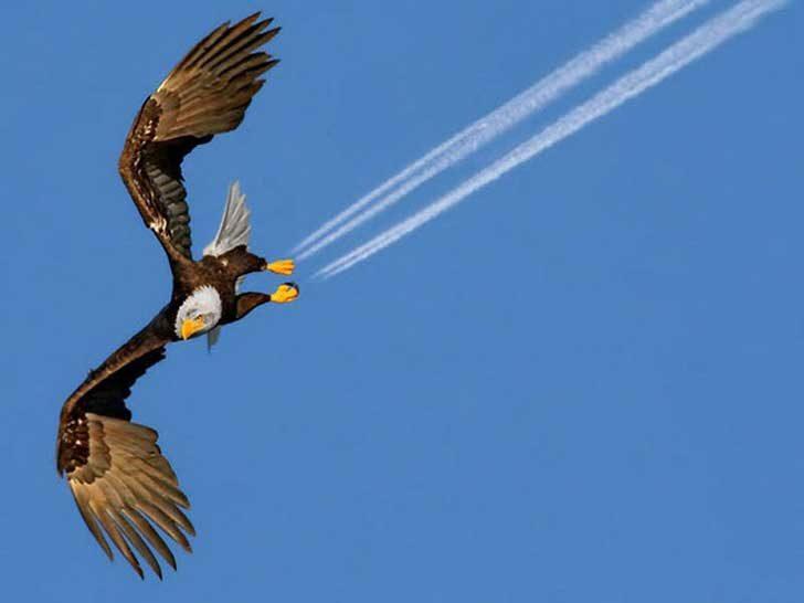 Свръхзвуков орел