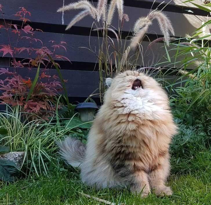 """""""Ще запея!"""""""