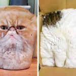 23 забавни снимки, показващи, че котките нямат кости