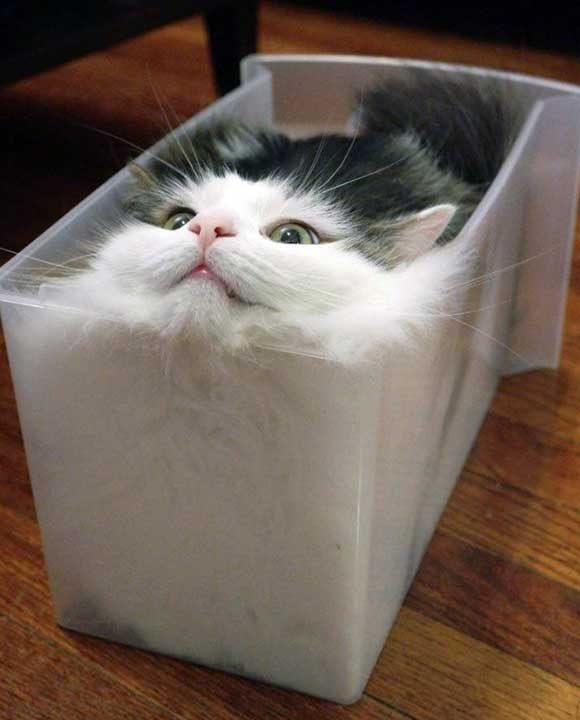 Кой е казал, че пластмасовите кутии са само за играчки?