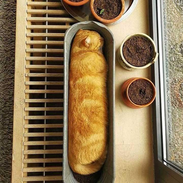 Внимавай да не изядеш този пресен хляб