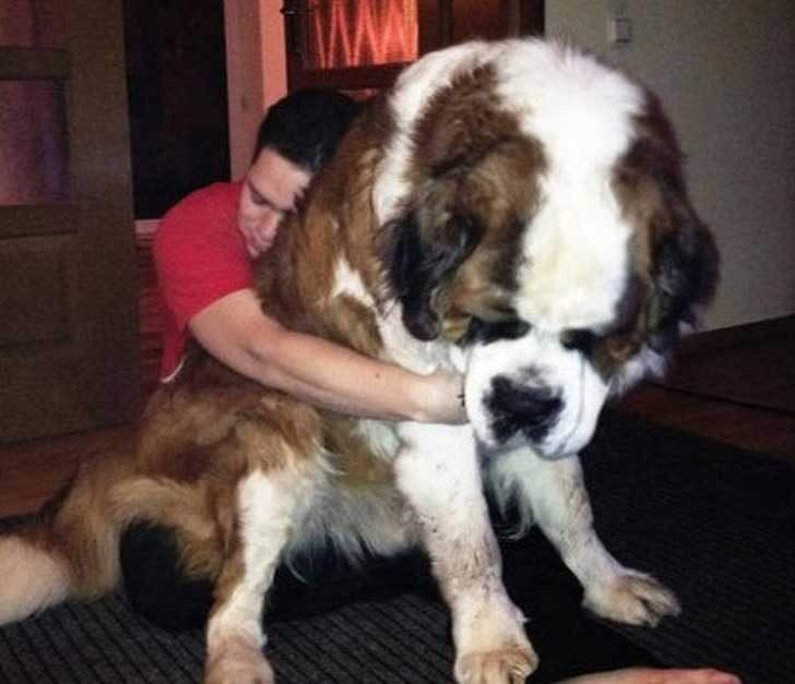 Огромни кучета за огромни прегръдки