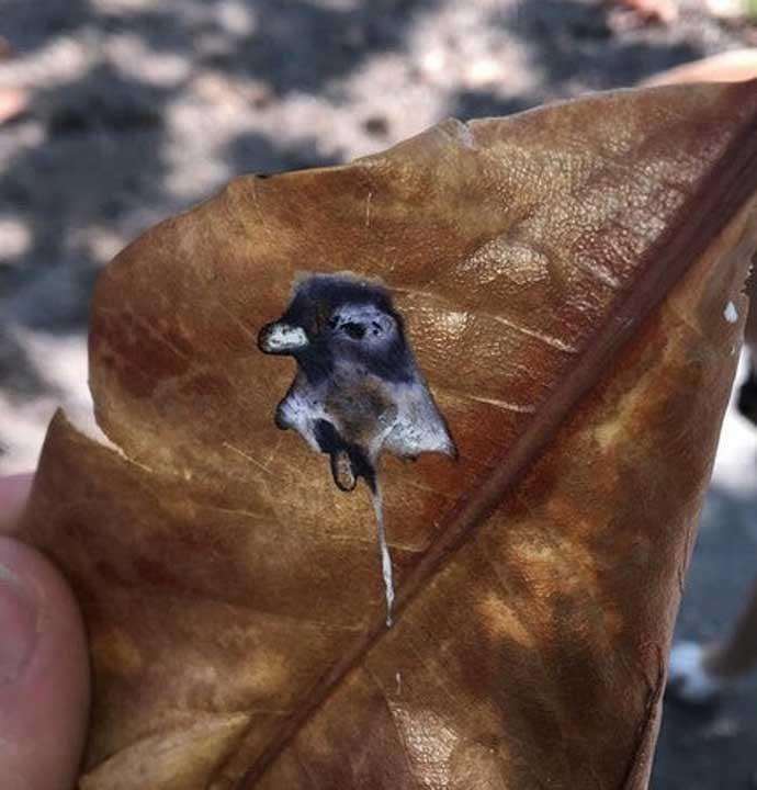 Гълъб, който си е направил автопортрет върху листото с... Познай!