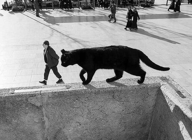Гигантска котка навлиза в града