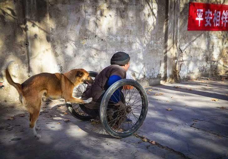 Приятел в нужда се познава: Това куче помага на този човек да отиде на работа, бутайки количката му