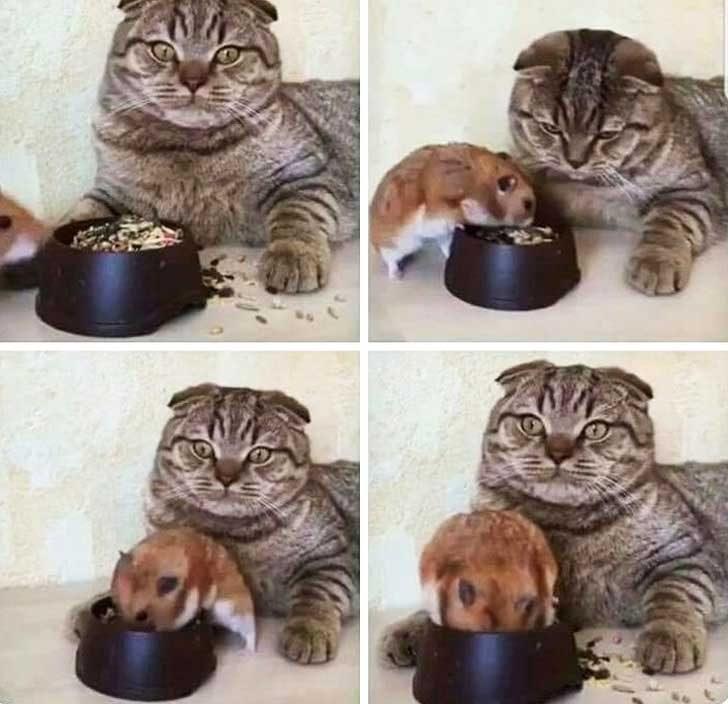 Когато тя ти каже, че не е толкова гладна, но може да опита малко от твоето ядене
