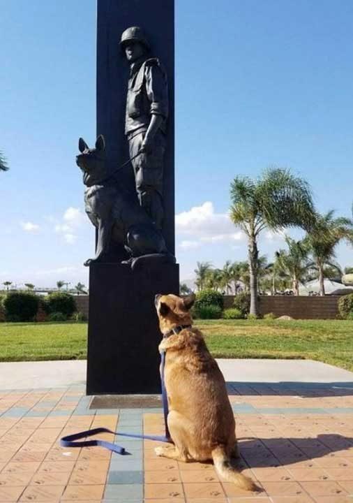 """""""Заедно с моето куче посетихме мемориал на военно куче"""""""