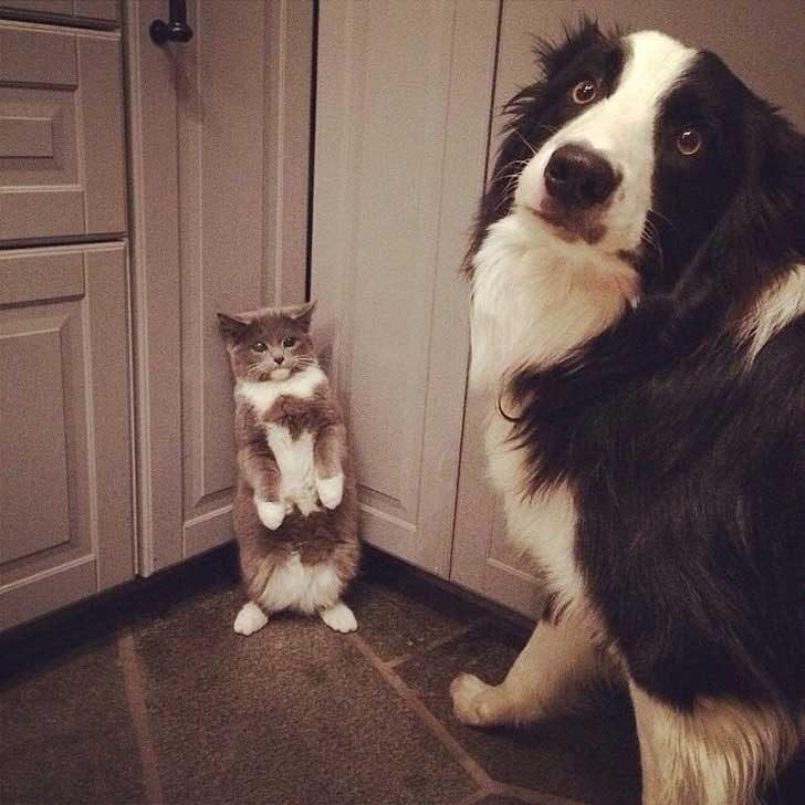 Тези двамата гледат така, сякаш определено не са били особено послушни допреди малко