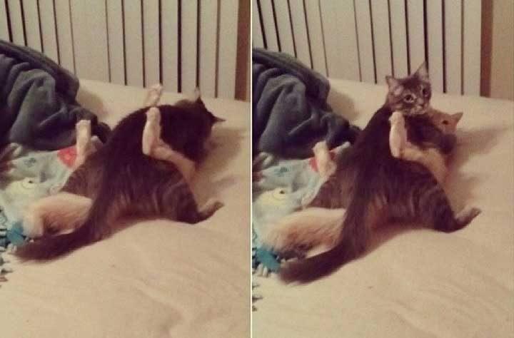 Нищо необикновено няма тук... Просто 2 котки, които.. Хм, се борят?...