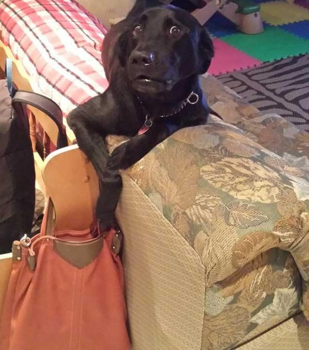 """""""Хванах го, докато се опитваше да пребърка чантата на мама"""""""