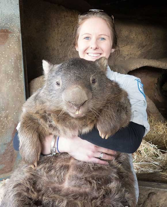 Най-старият в света австралийски вомбат