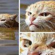 20 гневни котки, с които не би искал да си имаш работа