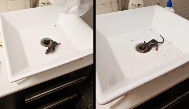 """""""Това бебе плъх току що излезе от канала на мивката. Ню Йорк, ти си най-големият ми кошмар!"""""""