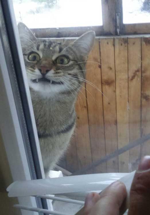 """""""Отвори! Умолявам те!"""""""