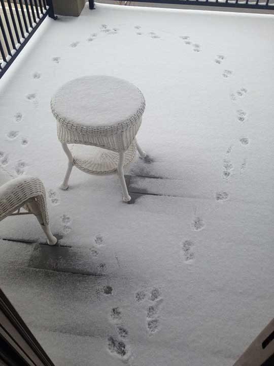 """""""Това е стъпките, които кучето ми е оставило на терасата, след като е осъзнало колко студено е навън"""""""