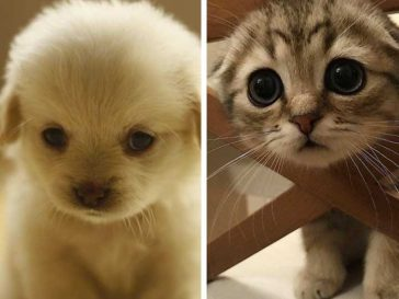19 сладки животинки, които ще разтопят сърцето ти