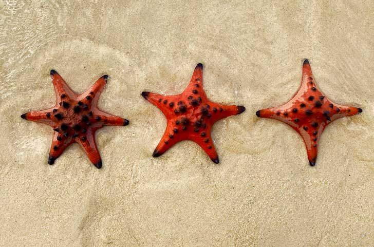 Морски звезди с 6, 5 и 4 ръце