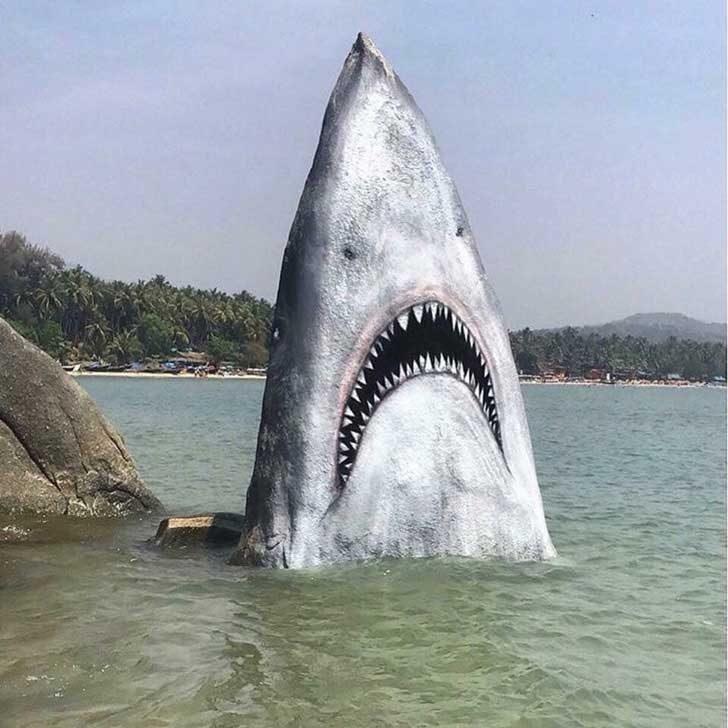 """""""Това е акула! Бягайте!"""""""