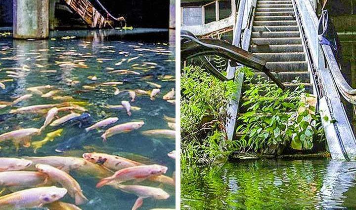 Природата винаги побеждава и тези драматични снимки ще ти покажат защо