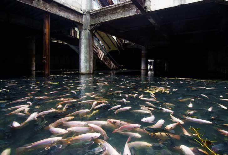 Хиляди риби са превзели този изоставен мол