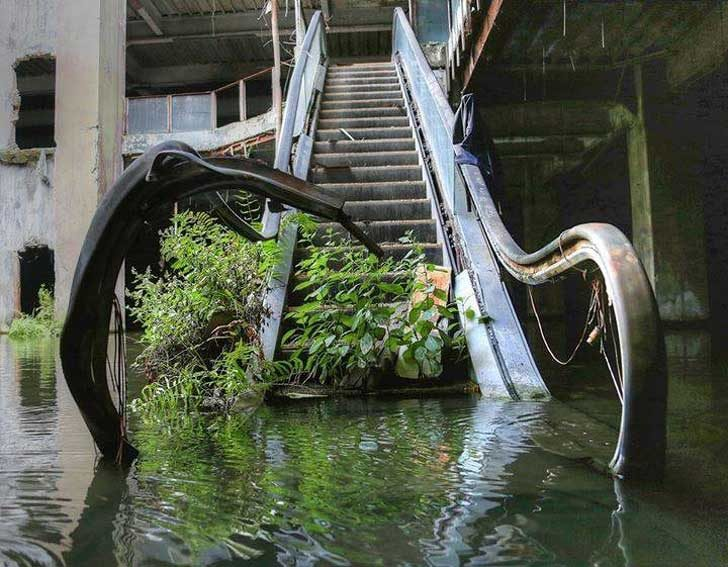 Растенията са единствените, които могат да изкачват тези стълби вече