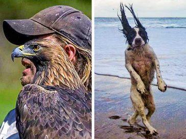 20+ забавни снимки на животни в идеалния момент