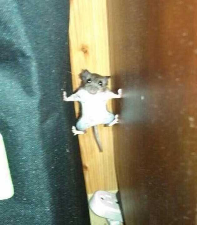 Тайни кадри от тренировка на специалните части на мишките