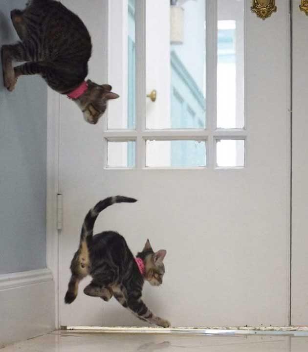 Гравитация не съществува за котките