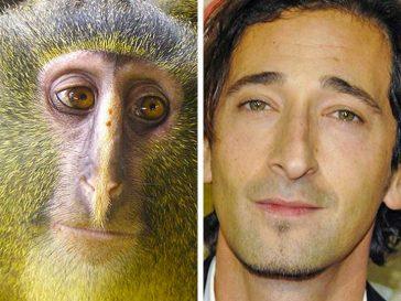 18 животни, които изглеждат като известни личности