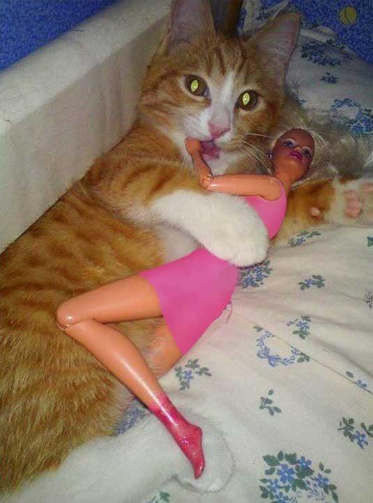 Когато дори и котката ти си има гадже