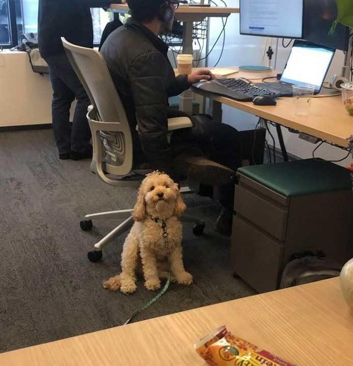 """""""Кучето на колегата не спира да ме наблюдава"""""""