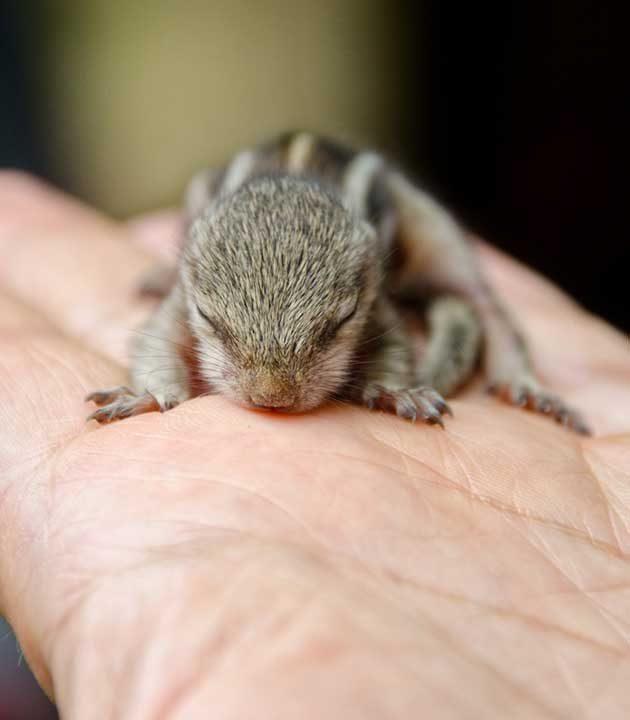 Ако катеричките не са ти достатъчно сладки, това е бебе катеричка