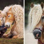 15 невероятно красиви коне, които не можеш да спреш да гледаш
