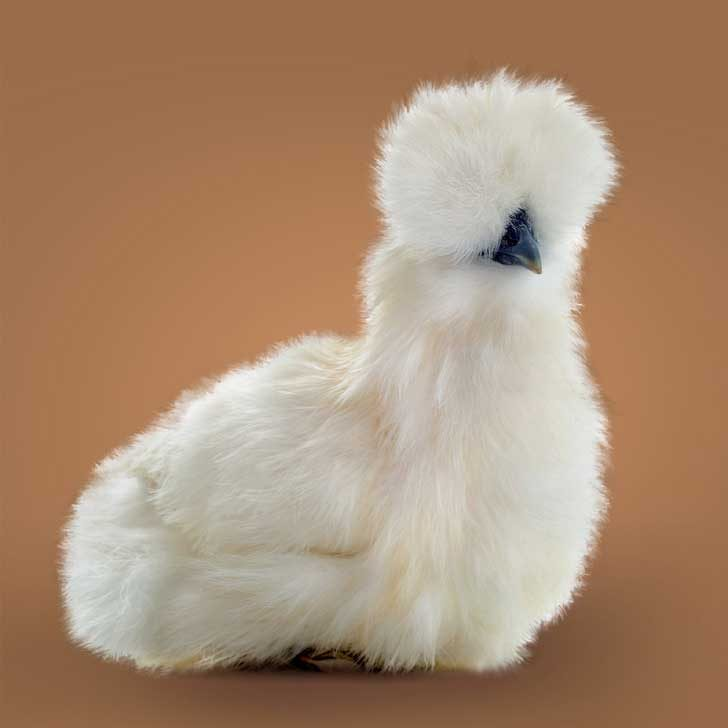 Съществуват птици с козина, наречени копринки