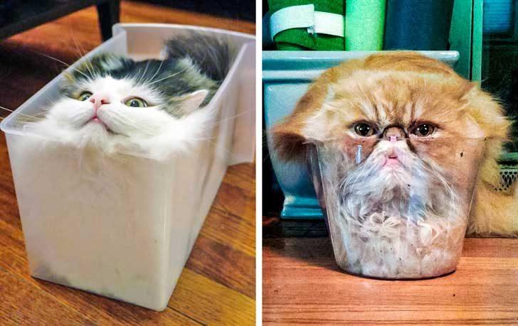 Да си кажем чеснто, котките са течни