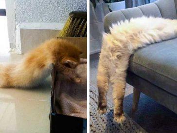 20 непохватни котки, които заспаха в най-странни пози