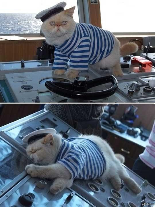На котките в Русия е разрешено да служат във флота