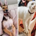 25+ смешни снимки с животни, които ще ти оправят настроението
