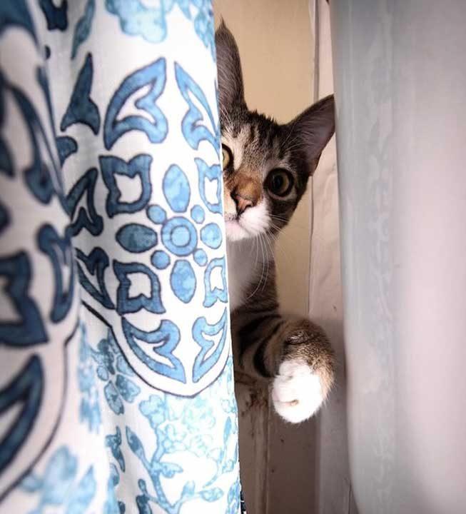 """""""Ела! Скрий се при мен"""""""