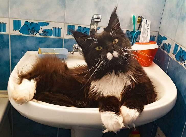 """""""Аз и котката ми наистина се нуждаем от график за банята"""""""