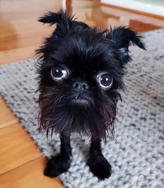 """""""Казват, че съм куче, но аз не съм сигурен..."""""""