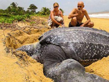20 удивителни животни, чиито размер е отвъд твоите възприятия