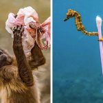 22 шокиращи снимки, умоляващи те да спасиш света